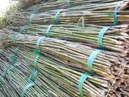 Functional  Bamboo Pole Wear Resistant Environmental Friendly 0.1-12m Length
